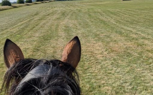 Off road hacking3 - horse in the field | wood farm livery facilities | wood farm livery